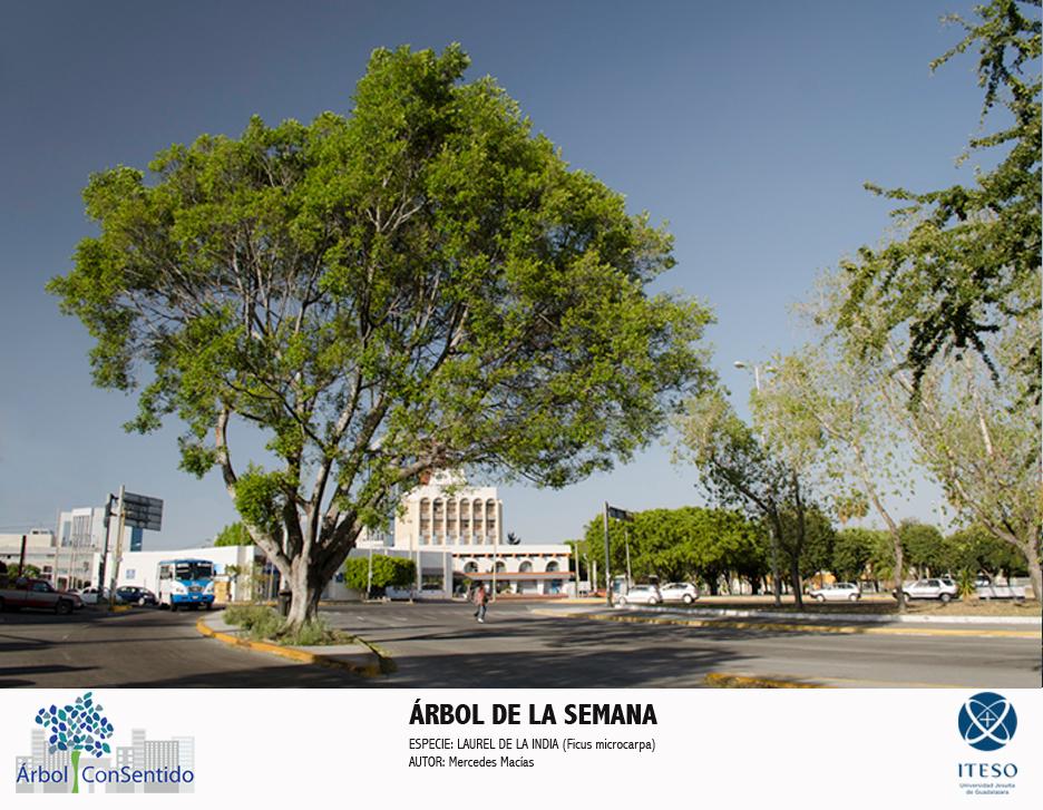 ARBOL DE LA SEMANA 06
