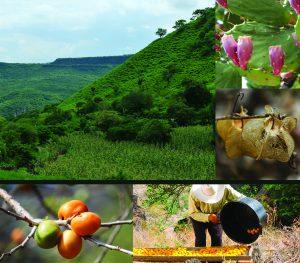 El panorama natural de la barranca cuenta con vegetación semitropical, fauna y paredes de roca basáltica. En la temporada de mayor sequía se pueden observar los cultivos de ciruelas y de mangos, que pintan de amarillo la barranca. Los cultivos de frijol y chiles completan la paleta de colores.