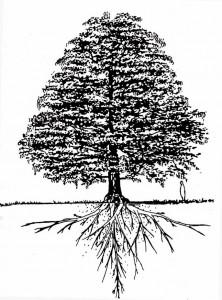 Dinámica del árbol